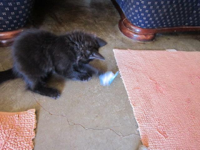 Wait until I get a mouse!