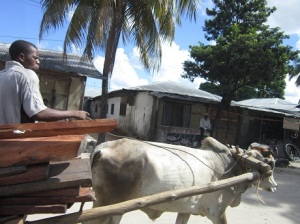 Brahma hauling a heavy load
