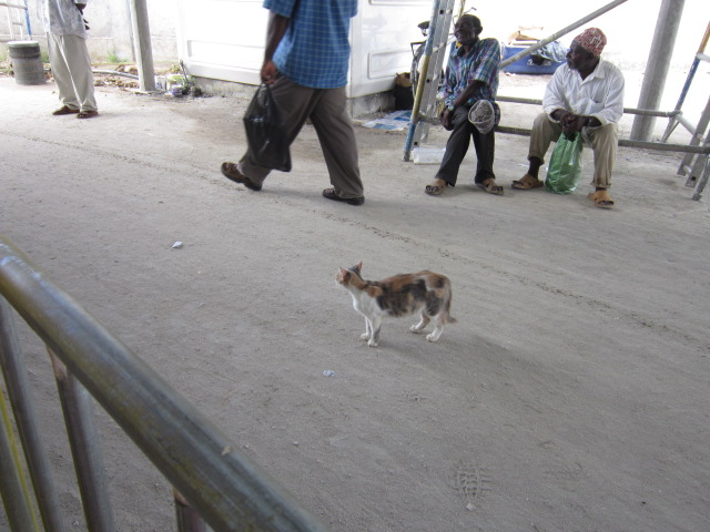 A Zanzibar Kitty
