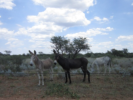 And of course, donkeys