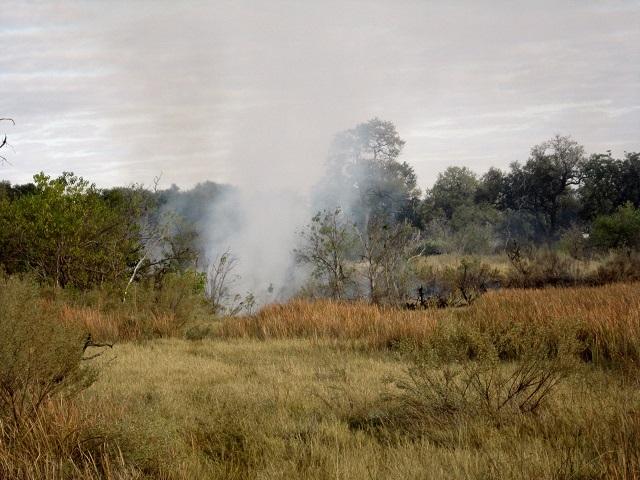 bush fire 1