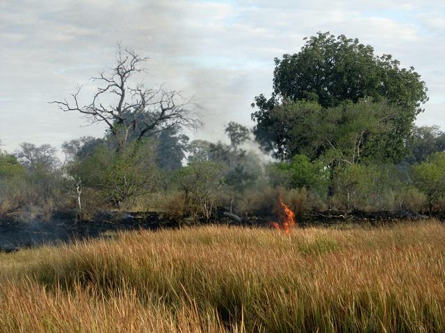 bush fire 3