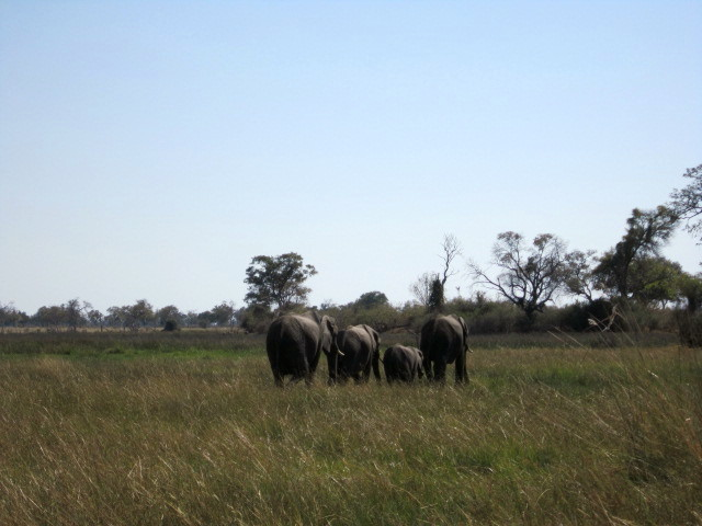Departing elephants