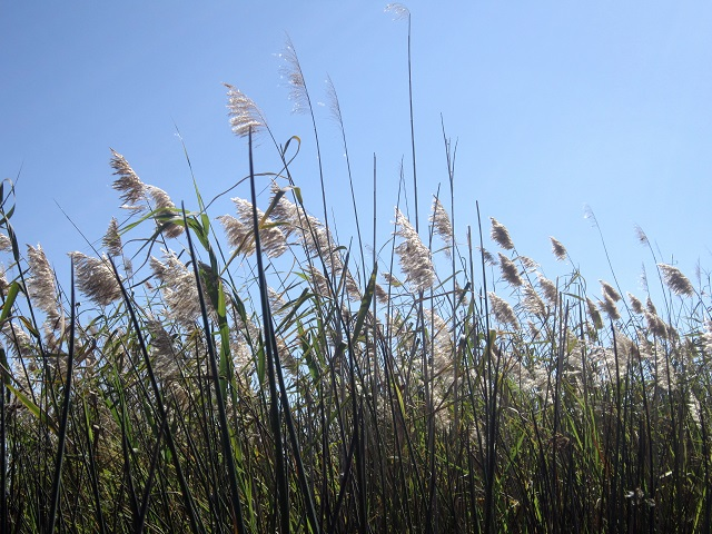 Beautiful grasses waving above our heads