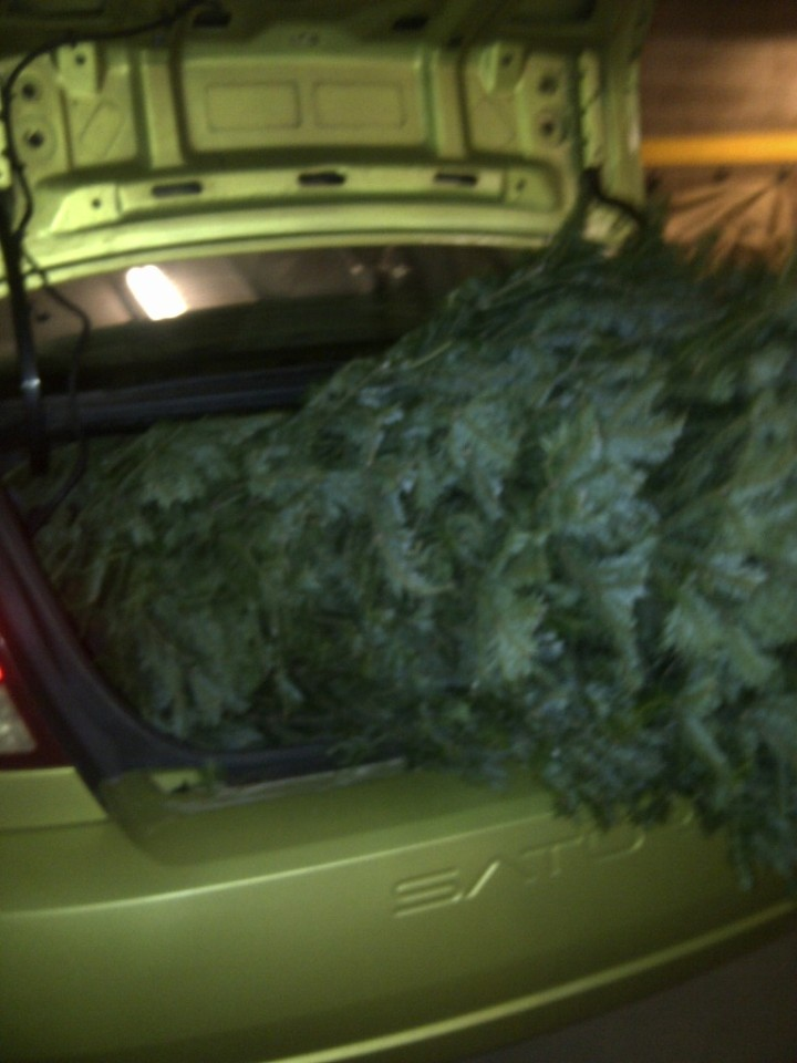 A trunkful of tree